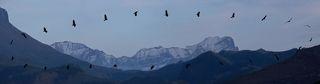 Траектория полёта орла, серийная съёмка, монтаж