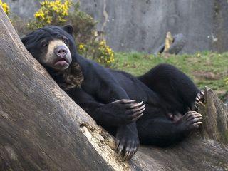 Кресло для медведя