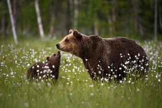 Медвежьи нежности