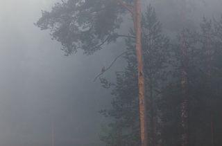 И обитатели Павловска заманивали в его туманные леса...