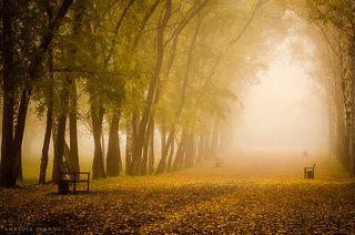 Туман в осеннем парке