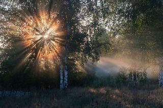 01 Лёгкий туман способен преобразить даже самые простые сюжеты. Простая опушка на околице деревни становится театром теней и света.