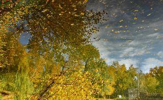 Когда летят по небу листья...