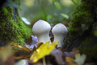 Последние грибы уходящей осени.