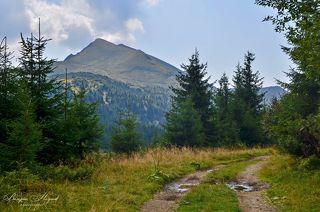 Дорога к вершине Поп Иван мармаросский 1936,2 м. Находится на границе Украины и Румынии.