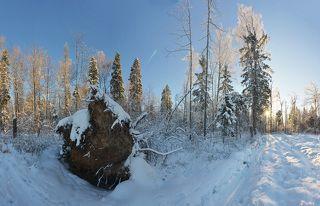 Первый солнечный день зимы, лыжня зовёт!