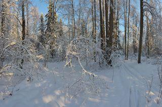 Через лиственный лес...