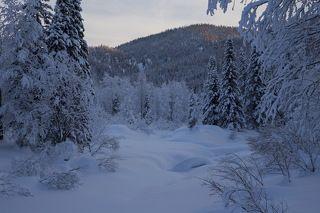 Пока все спят, нужно успевать фотографировать... Чуть позже весь красивый снег избороздят снегоходами.