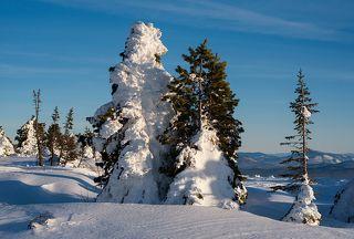 01 Зимние оттепели стали приметой не только средней полосы России, но и Сибири.