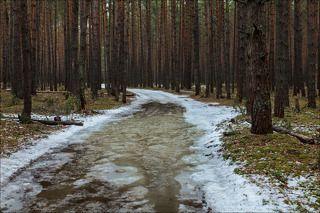 В апрельский лес