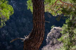 Над Агурским ущельем