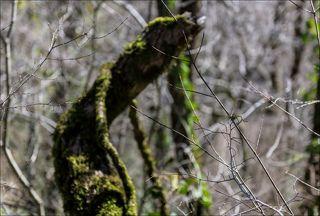 Образ из весеннего леса