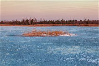 Лесное озеро на восходе
