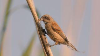 3.А вот попался и сам паучёк . Все пригодится . Так продолжается весь день . Взрослые птицы выглядят уставшими . Такая вот история в картинках .