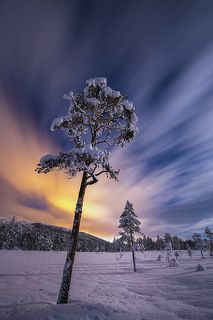 Winter night magic