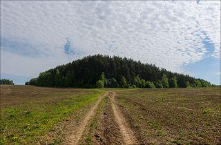 Начало дня у краеугольного леса
