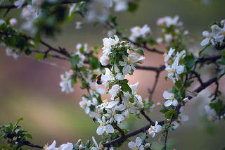 01 Конечно, весна, в первую очередь, вызывает ассоциации с ярким солнцем, синим небом  и сочной зеленью. Но что делать, если картина мира оказалсь не столь радужной?