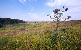 03 Открытые ландшафты с живописными лугами на чернозёмных почвах – это Среднерусская провинция, находящааяся на одноимённой возвышенности на крайнем юге Московской области
