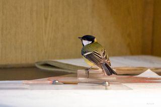 Птички залетают во внутренние помещения судна, даже в машинное отделение. Здесь синица в гостях у штурмана.