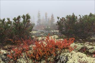 Мир туманного плато