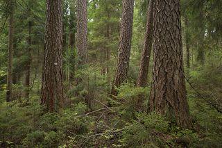 Старые деревья пронумерованы
