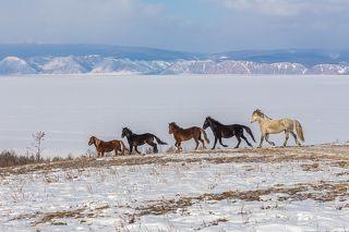 Тажеранские степи. Ольхон, Байкал.
