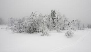 02 Прямо около трассы начиналась практически нетронутое снежное великолепие берёзовых рощ, ...