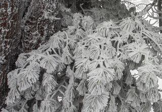 03 А как Вам такие снежные дреды?