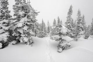 01 За снежную ночь изрядно истоптанные склоны горы Зелёной превращаются в сплошную целину, ...