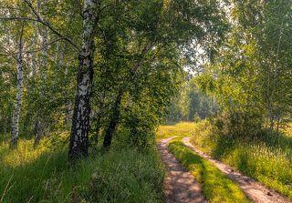дорога на луг