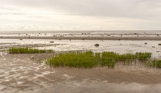 Отлив воды на Белом море