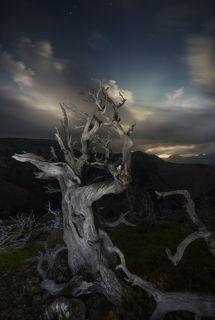 ПОчти вершина горы. Из за ветров и суровых зимних температур деревья не выживают на казалось бы небольшой высоте (2200м над уровнем моря. )Сухое дерево на фоне ночного неба. Облака подсвечены луной. Впервые увидел, как луна может производить такие лучи