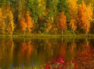 Пришел октябрь. Поднес под кроны  Свой факел – вспыхнули леса.  Одна сосна огнем зеленым  Смеется осени в глаза.