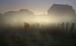 Обычное утро в нашей деревне