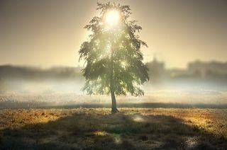Душа дерева