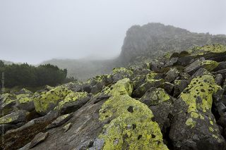 Gorgans in Carpathian mountains
