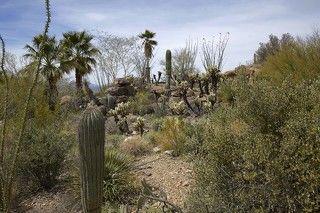 Осадки в течение года выпадают неравномерно, сильно колеблясь по годам. Здесь отмечено два дождливых периода: зимний — с декабря по март и летний — с линевыми дождями с июля по сентябрь. Количество осадков колеблется от 100–250 мм. Температура круглый год положительная. Максимальная температура 38° С. Даже в феврале температура поднимается до 32° С. Почвы тропические пустынные, во многих районах — засоленные.
