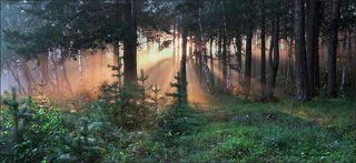 Светопреставление в утреннем лесу