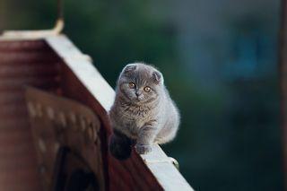 любит убегать на балкон, и смотреть на голубей...