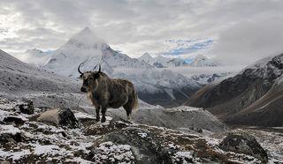 Як на фоне Ама Даблам, Гималаи.