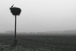 Сельское утро