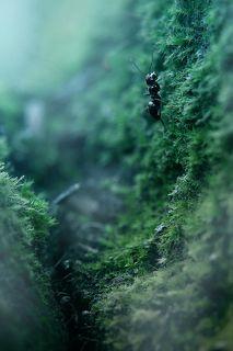 муравьиный триллер