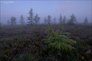 Туман в тундре