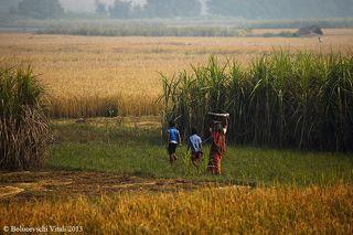 На фоне сахарного тростника. У индусов в городах часто можно встретить лотки где из сахарного тростника отжимают сок для приготовления напитка.