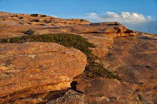 №3. Не всякое растение приживется на камнях под палящим солнцем. Можжевельник - одно из них.