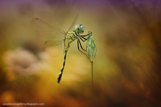 Just dragonfly