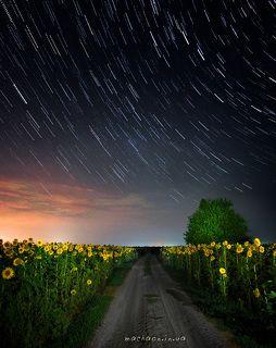 ночь, поля, подсолнухи, звёзды