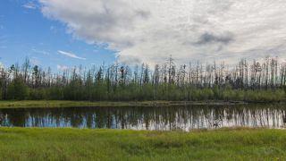 Отражение мертвого леса