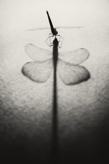 поцелуй стрекозы