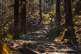 На высоте от 3000 м. до 4000 м. умеренно холодный пояс, в котором преобладают хвойные деревья. Днем солнце разогревает смолу елей, пихт, кедров, и от этого воздух насыщается сладковато-терпким ароматом хвои.